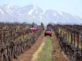 Israel Golan winery