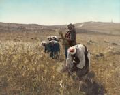 holy-land-barley-harvest-granger