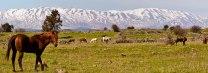Israeli Countryside Golan