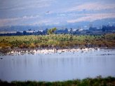 the_hula_valley_2
